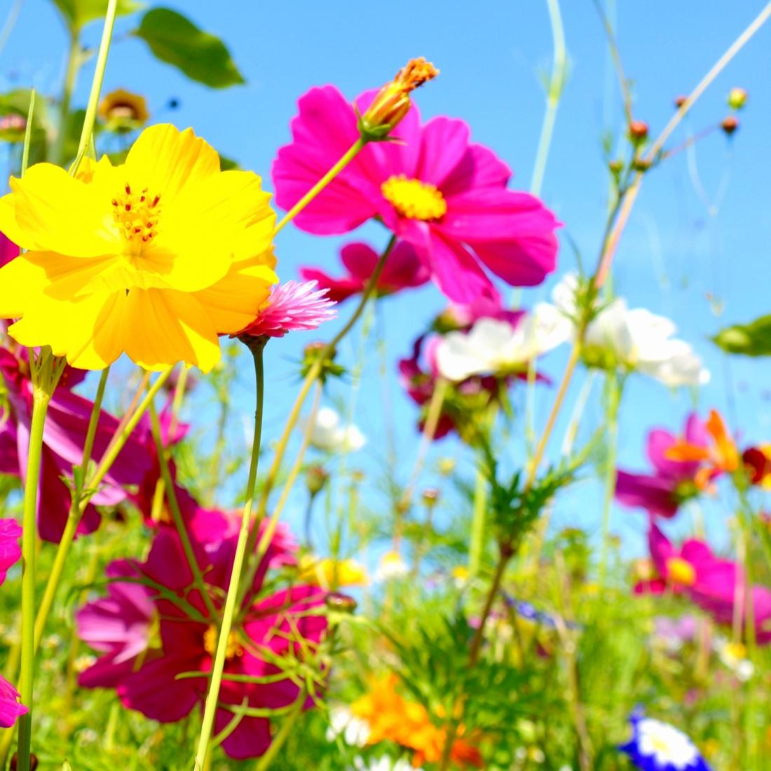 Fiori Selvatici Foto E Nomi cosa si intende per fiori di campo
