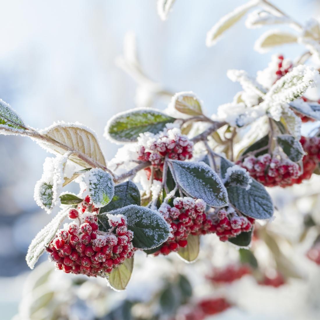 Come Curare Le Piante come curare le piante dopo il gelo