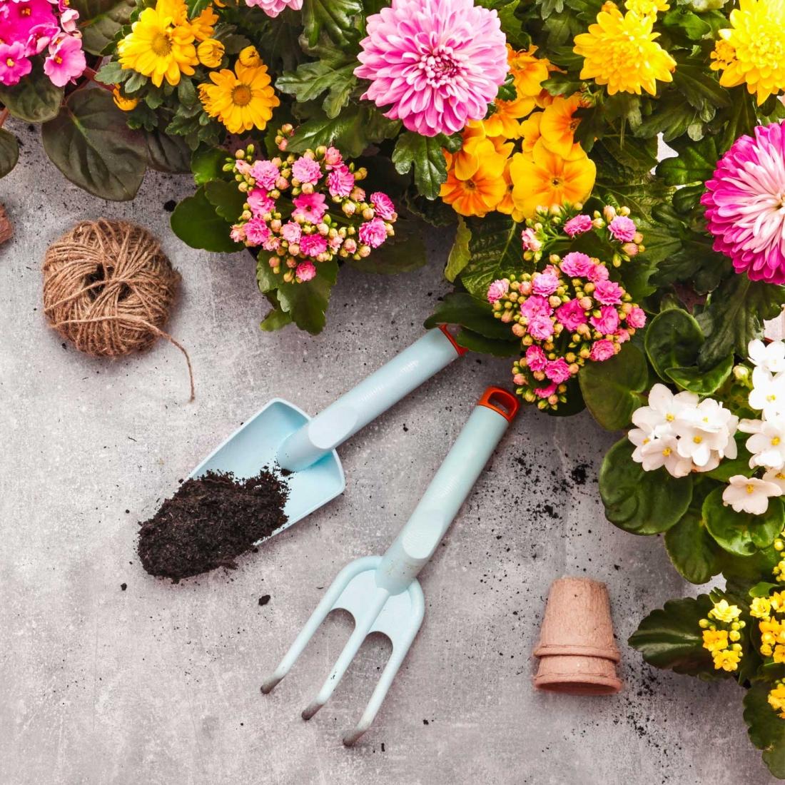 Cosa Piantare A Febbraio giardinaggio a marzo, ecco cosa c'è da fare questo mese