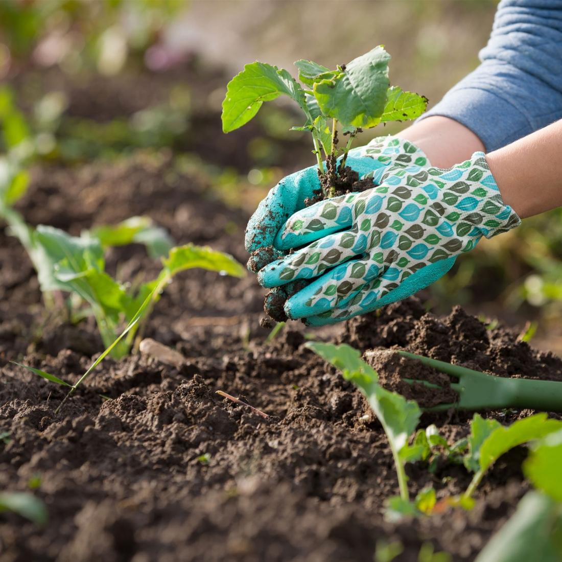 Fiori Da Piantare Nell Orto mantenere in salute l'orto in estate, 5 pratici consigli