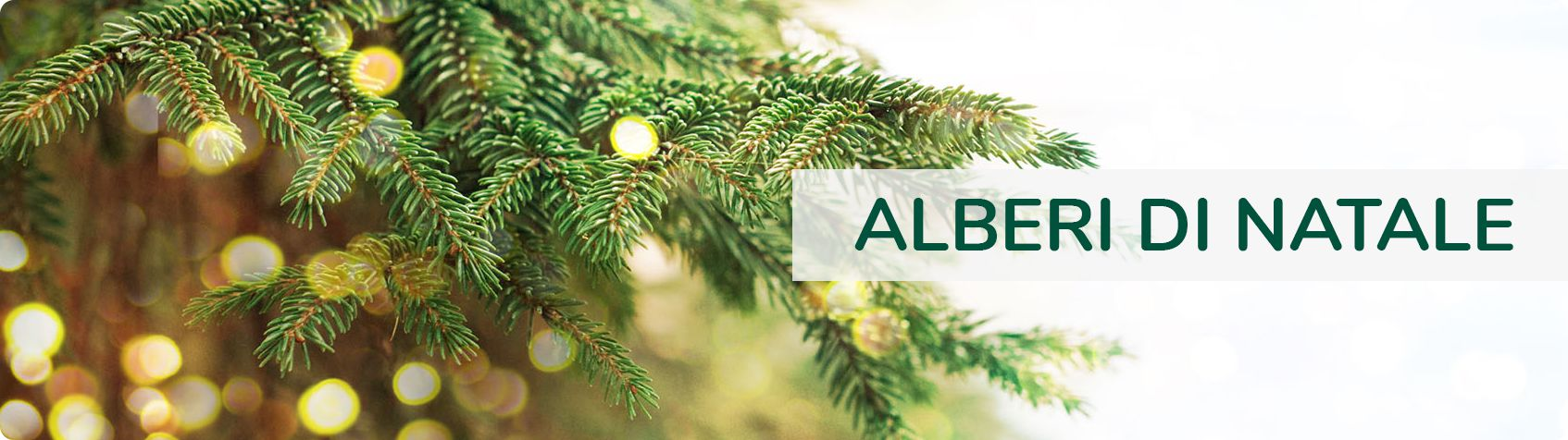 Albero Di Natale Kenia.Vendita Alberi Di Natale Consegna In 48h