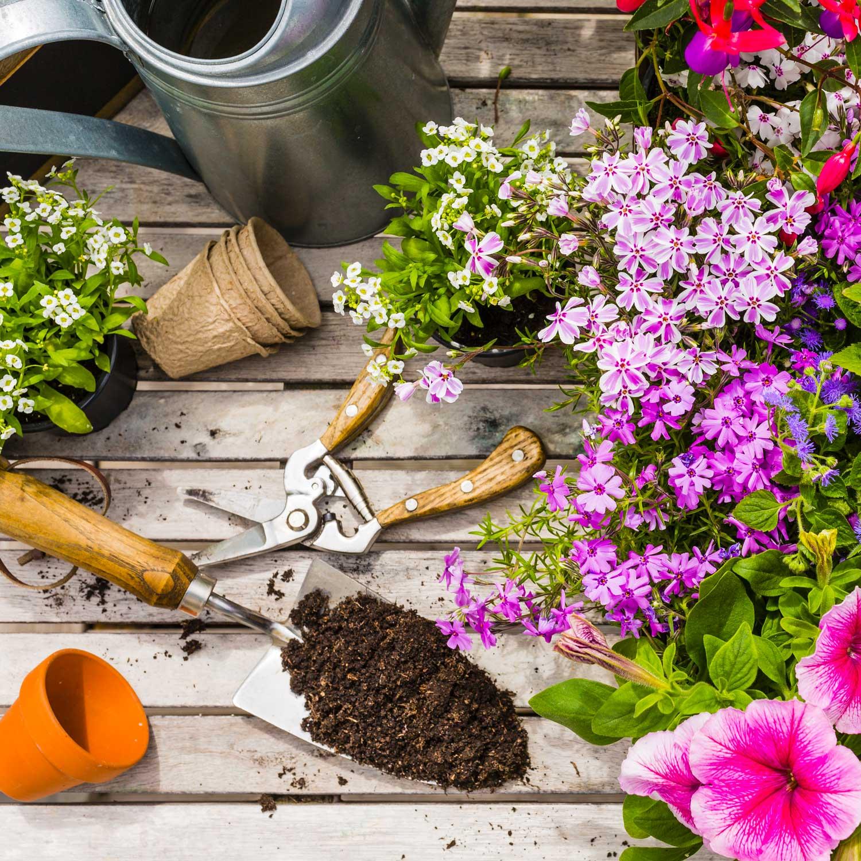 Cosa Piantare A Febbraio giardinaggio a febbraio, si inizia a pensare alla primavera